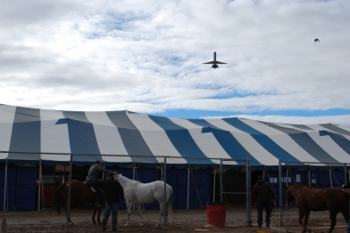 Airplanes fly directly over the holding pens and makeshift barns of the Wrangler NFR every few minutes, but the animals don't seem to mind.