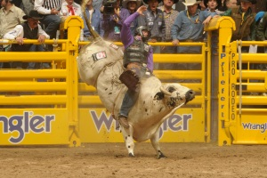 Cody Whitney, a Crown Royal Rider, won Round 2 of the bull riding Friday night.  (PRCA ProRodeo photo by Mike Copeman)