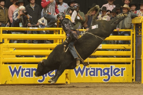 Beau Schroeder won the Wrangler NFR bull riding average title in his first trip to Las Vegas to finish fourth in the world in 2012.  --PRCA Photo by Mike Copeman