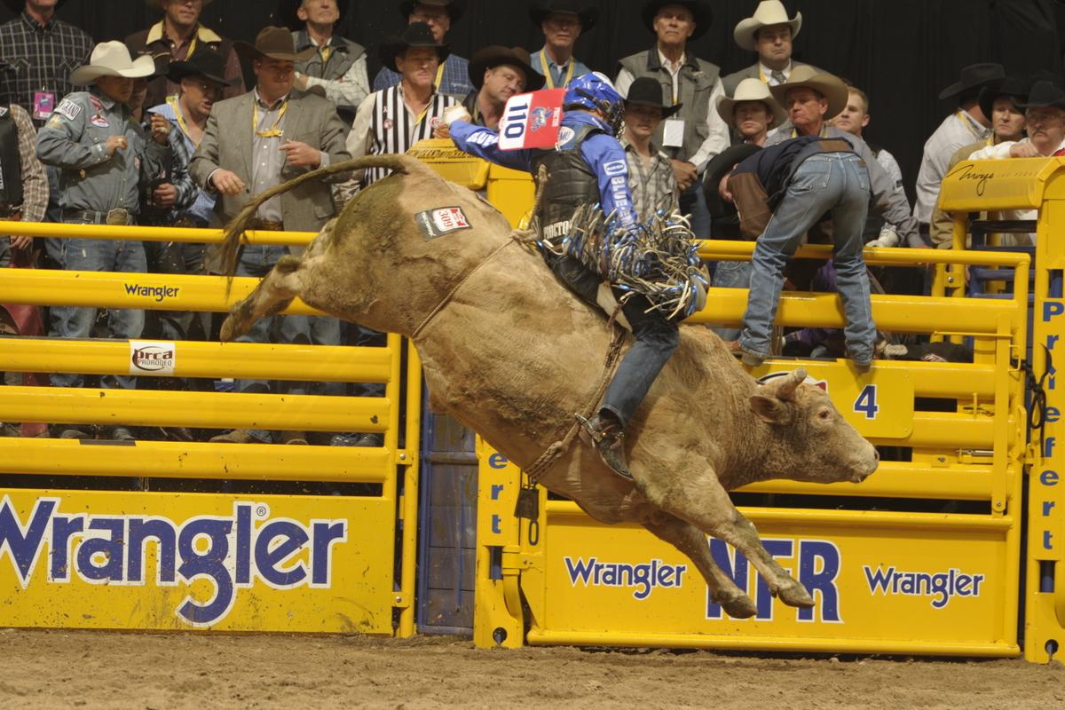 The art of raising a Wrangler NFR-caliber bucking animal | NFR Insider