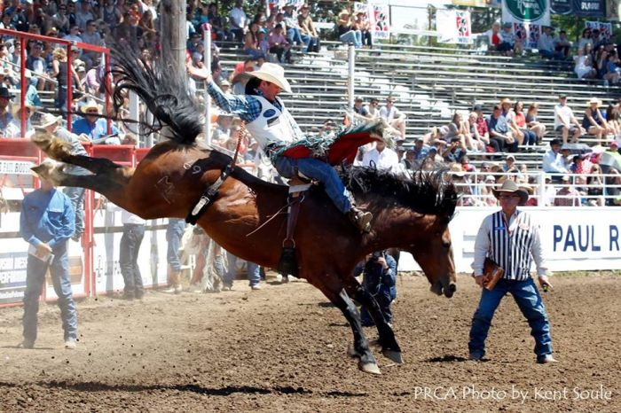 Tim O'Connell's record-setting ride at the St. Paul (Oregon) Rodeo over the 4th of July – PRCA photo by Kent Soule